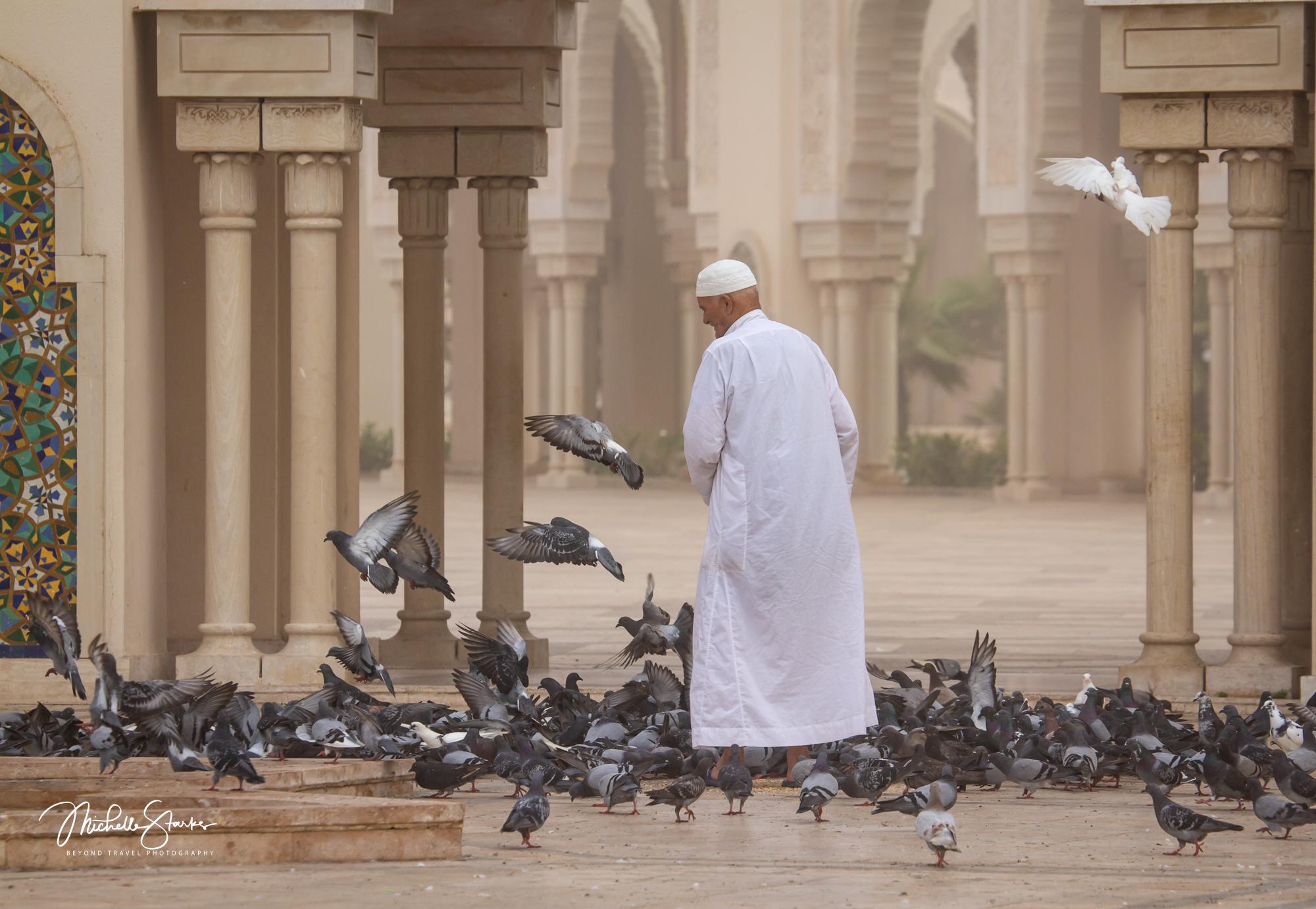 Feeding Birds, Grande Mosquée Hassan II, Casablanca, Morocco
