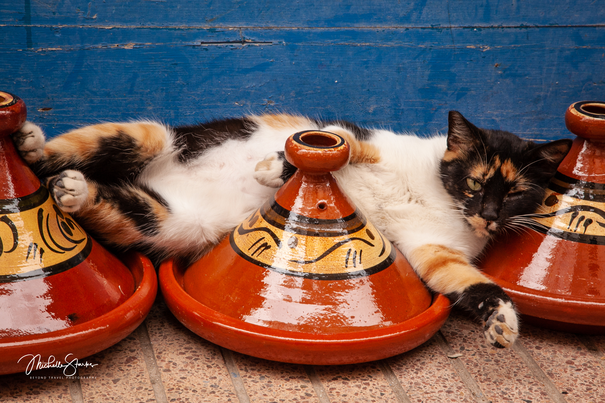 Cat Nap,  Essaouira, Morocco