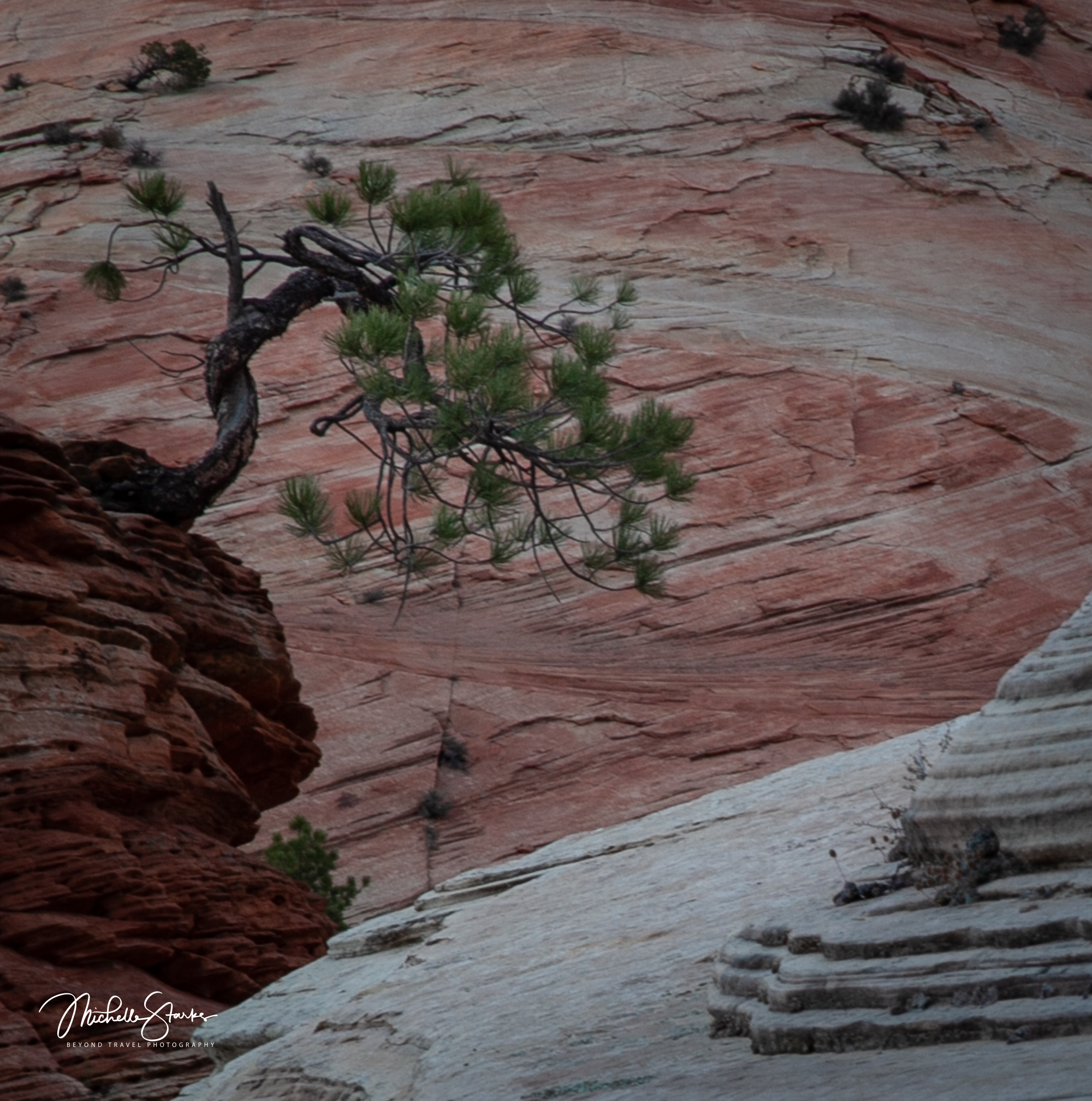 Little Tree, Zion National Park, Springdale, UT